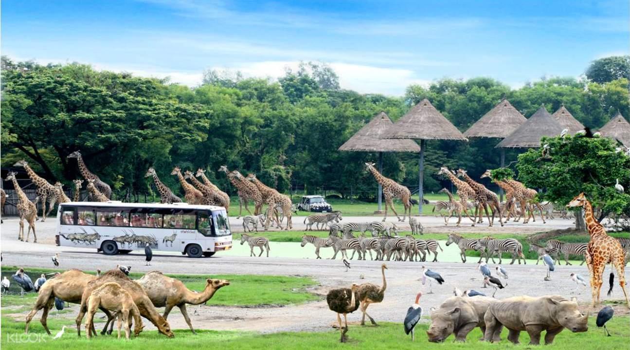 全区分为野生动物区和海洋乐园区,可体验与大自然,以及野生动物的近